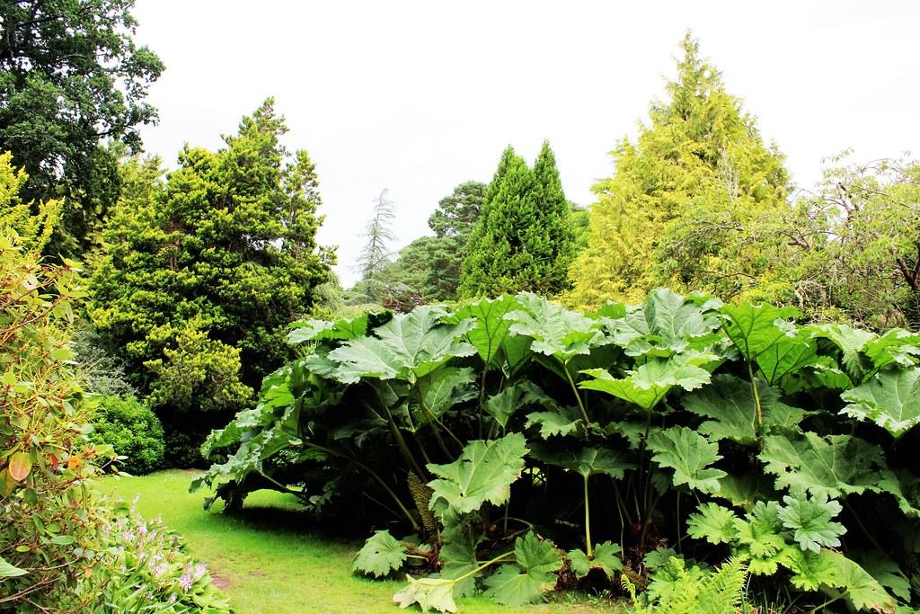 Lush greenery at Muckross House Garden, Kerry, Ireland
