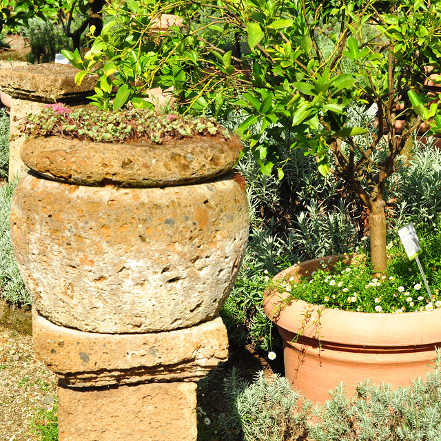 """Wie sieht eigentlich jetzt, im Herbst 2016, der Citrus-Garten des Mannheimer Luisenparks aus? Schön sieht er aus! Gleich neben dem """"Waldgeist"""", einer Motorsägearbeit von Rolf Bergmann, geht es durch ein schmiedeeisernes Tor mit hübschem Zitronenschmuck in den Citrus-Garten hinein. Toll ist es hier, richtig südlich - und das nicht nur wegen der paar Sonnenstrahlen. Ich finde es immer wieder faszinierend, dass an den Pflanzen gleichzeitig Blüte und Früchte erscheinen ... Fotos: Brigitte Stolle Mannheim 2016"""