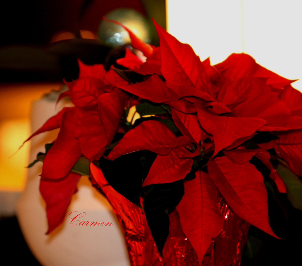 December 3, 2014 | The christmas song - Kenny G www.youtube.… | Flickr