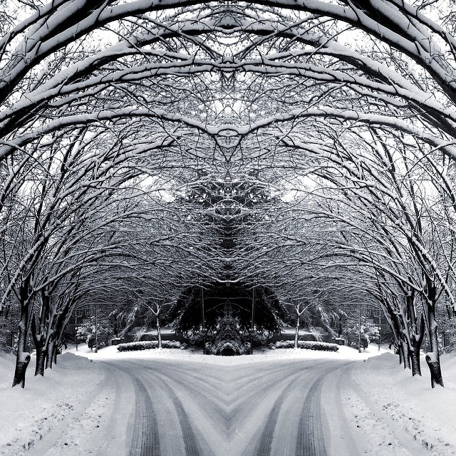 mirrored snow canopy | by christaki mirrored snow canopy | by christaki  sc 1 st  Flickr & mirrored snow canopy | Chris | Flickr