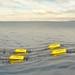 Grey Island Energy Inc.'s SeaWEED wave power system.