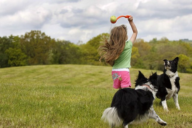 little girl and dogs playing fetch
