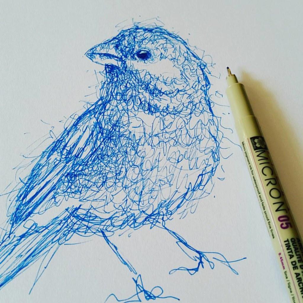 Scribble Sketch Drawing : Quick sketch scribble art penart bird drawing flickr
