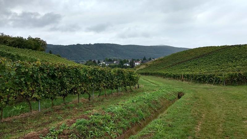 TourNatur: Auf zum Rotenfels durch die Weinberge
