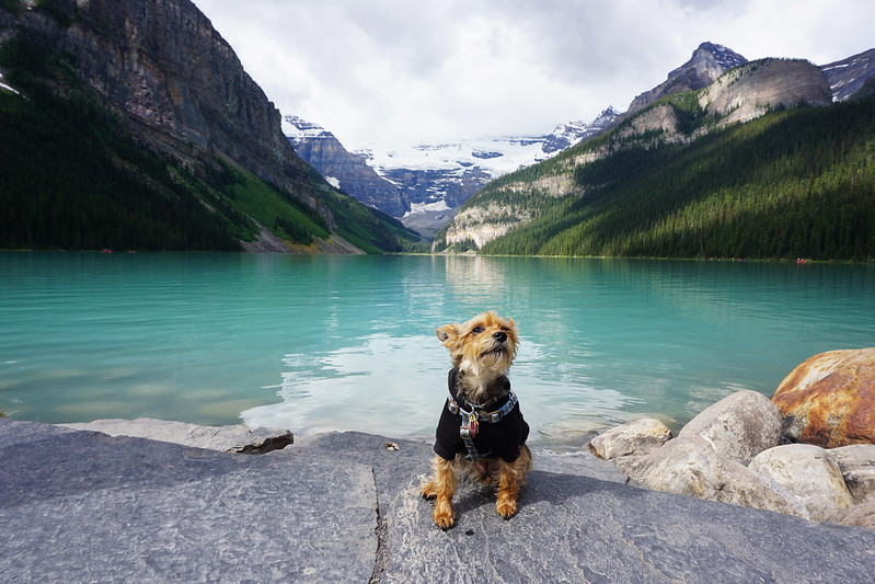 Luna at Lake Louise, Canada