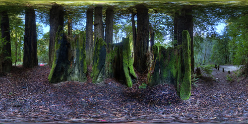 Navarro River Redwoods State Park in Northern California | by Bob Dass