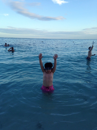 totally fearless caribbean swimmer | by smitten kitchen