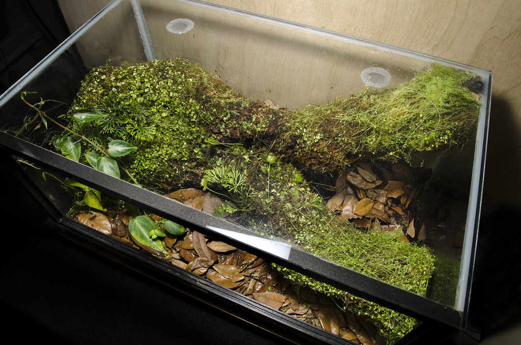 10 Gallon Ecuadorian Epiphyte Branch Vivarium | Shaun ... 10 Gallon Vivarium