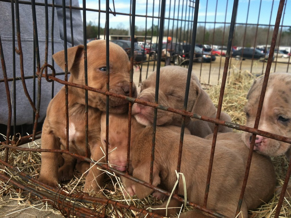 Selling Dogs