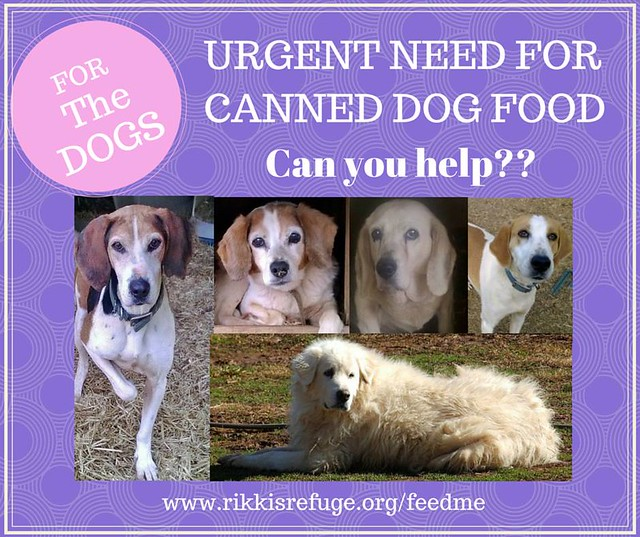 Should Canned Dog Food Be Refrigerated