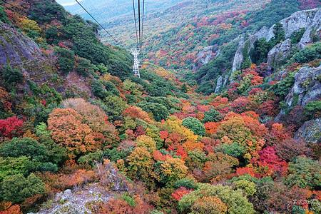 ▋日本賞楓秘境▋此生必看的寒霞溪楓紅勝景