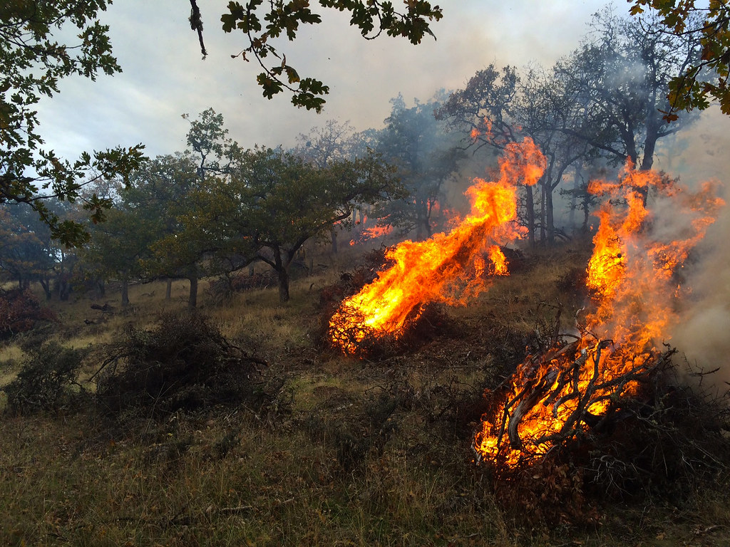brush removal handpile burn in oak woodland  western orego