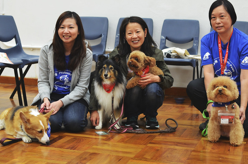 Volunteers and therapy dogs at Mental Health Week