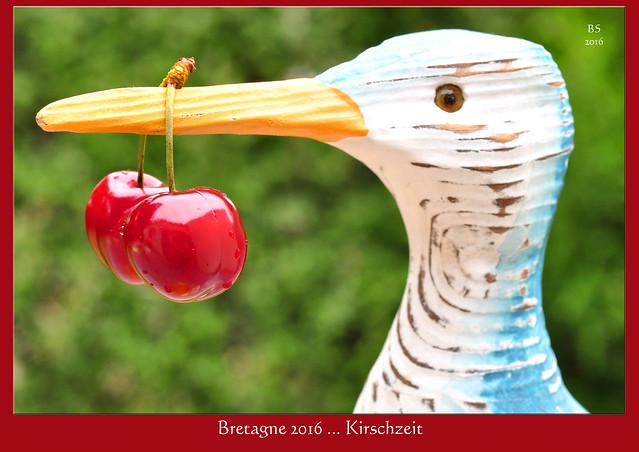Bretagne-Urlaub 2016 - Im Garten mit Karla Kunstwadl, Kouign amann und Kirschen ... Foto: Brigitte Stolle 2016