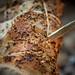 Cormarye (14th Century Spit-Roasted Pork)