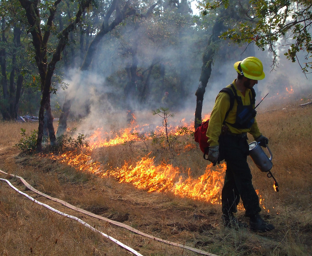 prescribed underburn using a drip torch along the control