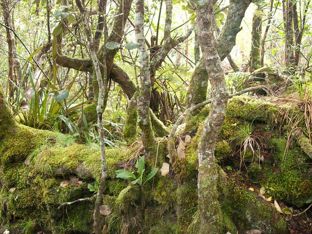 sentier botanique - Forêt Notre Dame de la Paix