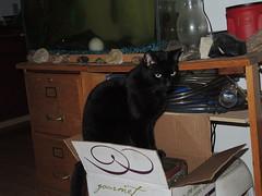 Jake on a box