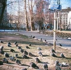 Antropovskiy square. Pigeons