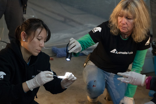 Animals Asia founder and CEO Jill Robinson in New Year Rescue, China 2013