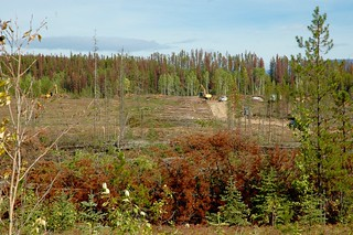 Salvage logging of a Mountain Pine Beetle attacked stand | by ubcmicromet