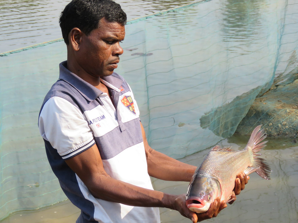 Small farmers eye big fish in Jharkhand