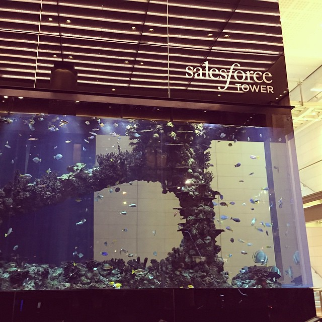 Pretty amazing fish tank in the lobby of salesforce tower for Tower fish tank