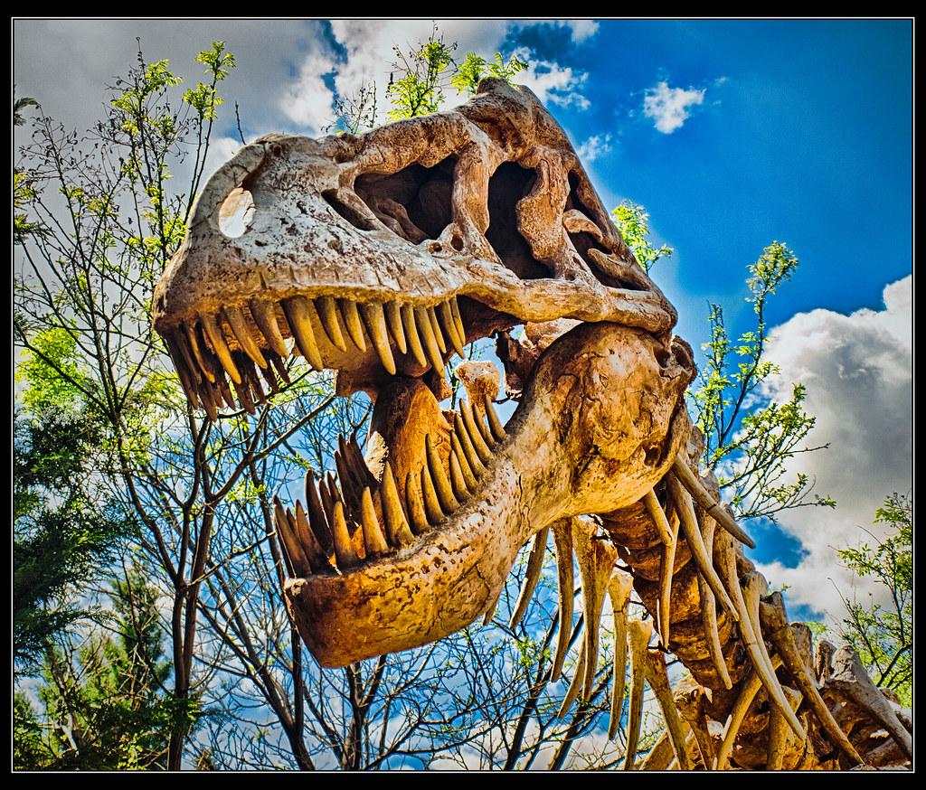 Latina rex