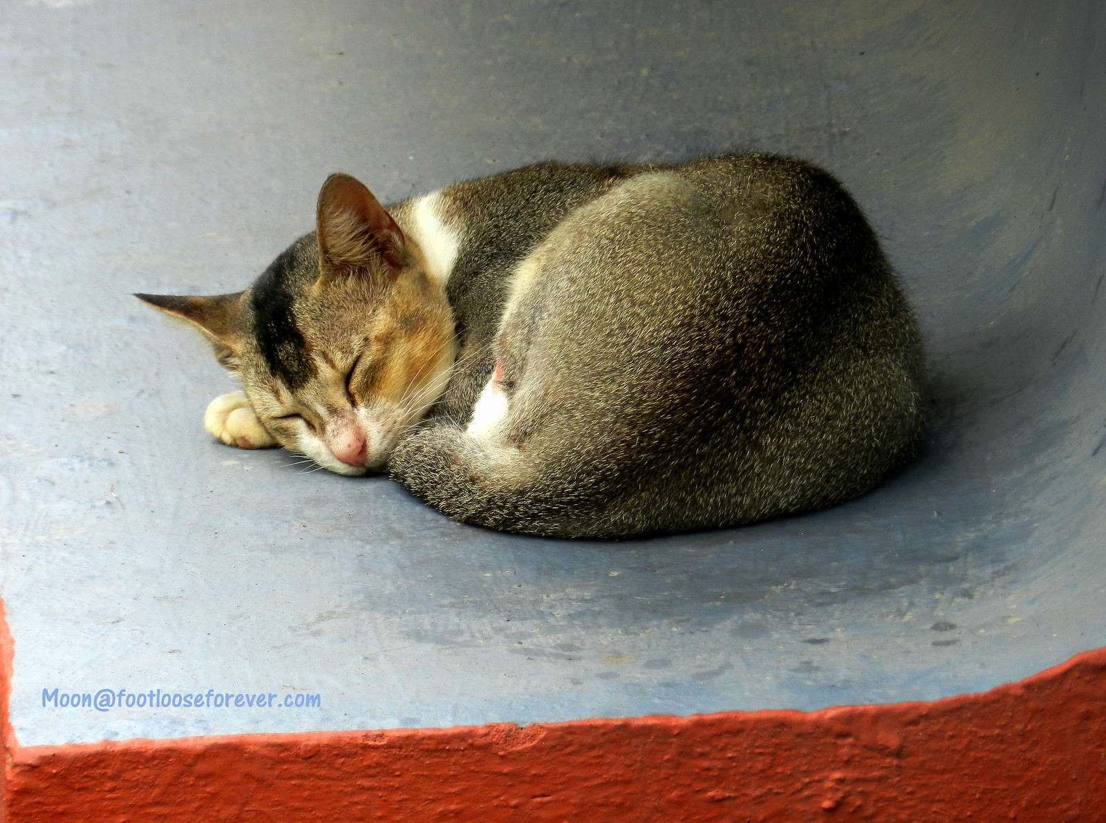 cat, sleeping cat,