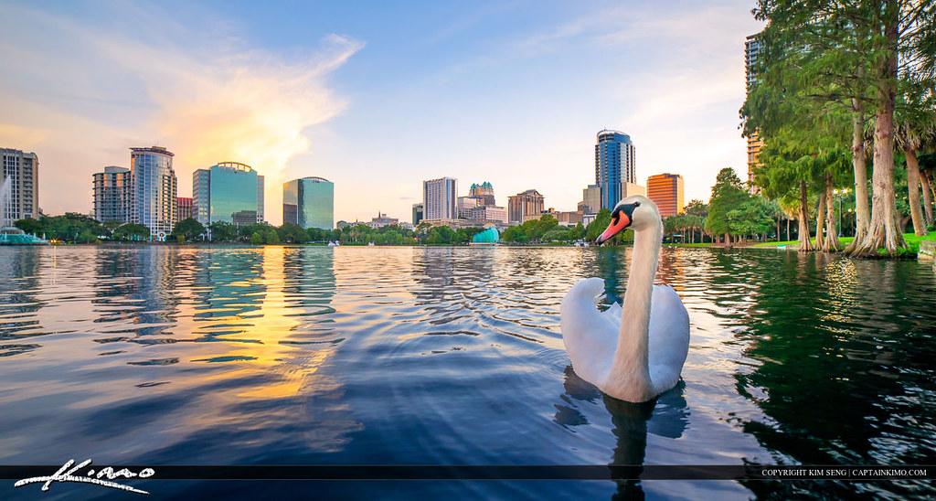 swan at lake eola park orlando florida cityscape swan at