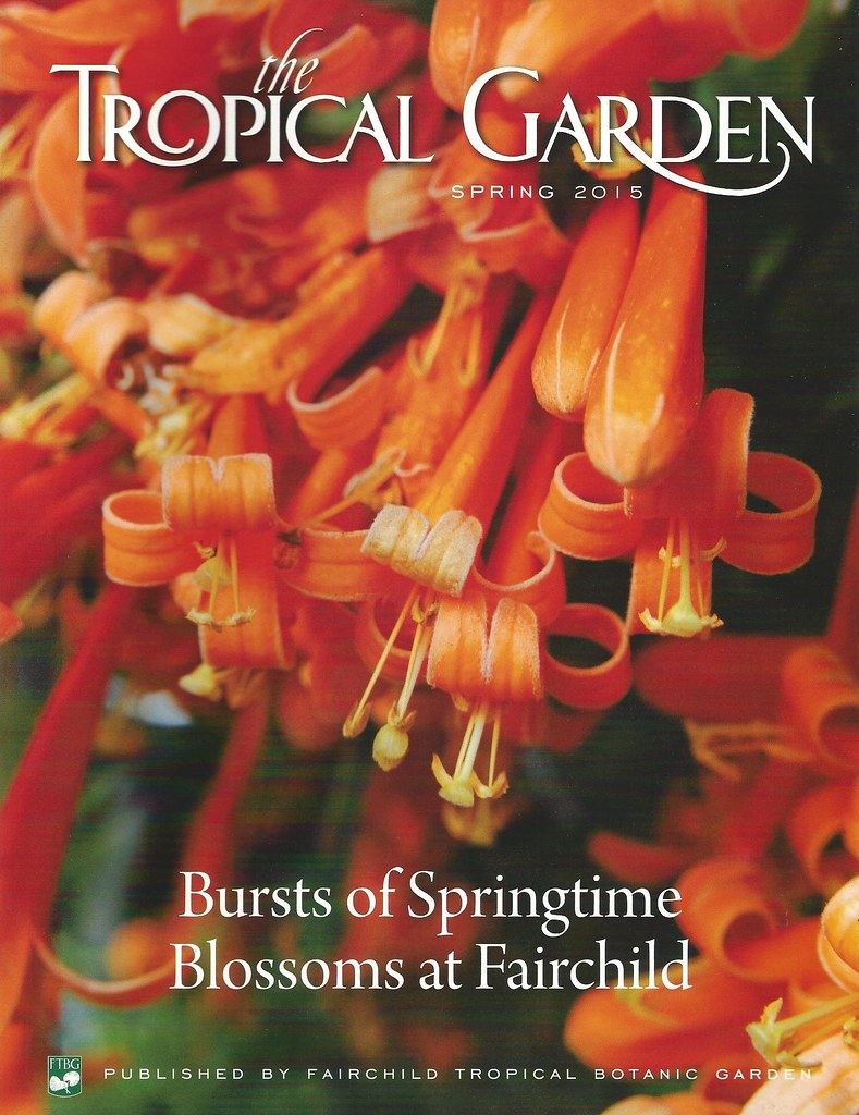tropical garden flame vine spring 2015 by jungle mama