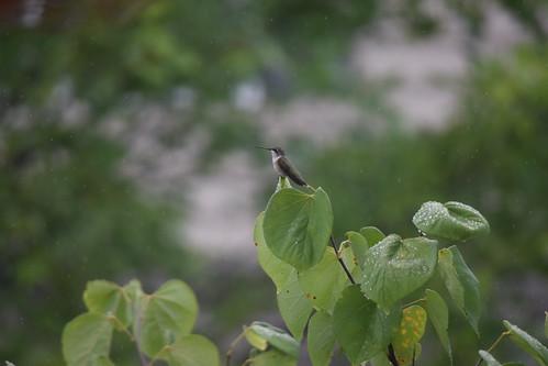 Birdie Hobby