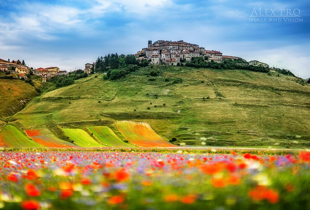 Flowers and colors in Castelluccio