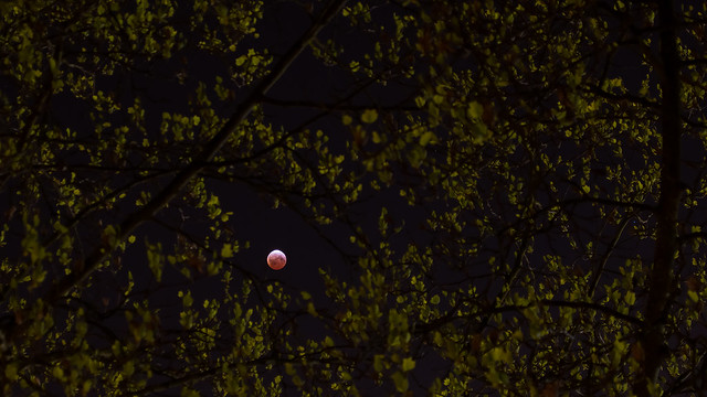 blood moon viewing vancouver - photo #27