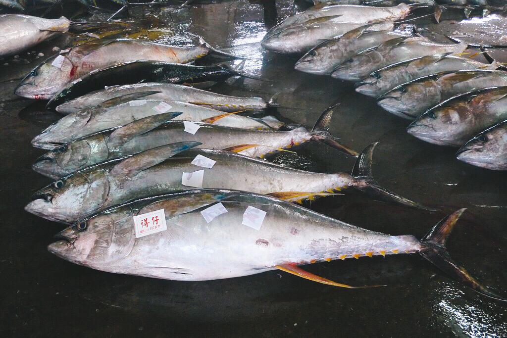 約40%的受歡迎魚種如鮪魚,捕撈量已經超過永續捕撈的上限。攝影:daniel huang(CC BY-SA 2.0)