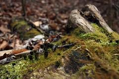 Az erdő mélyén / Deep in the Forest