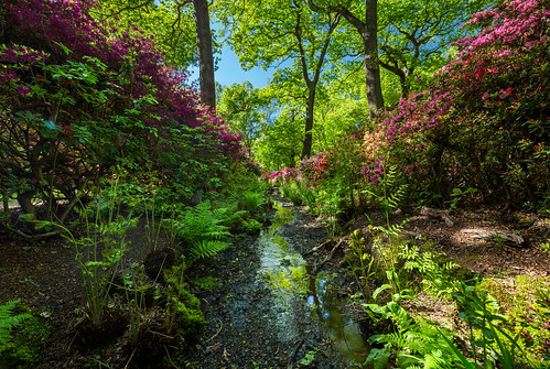 Meandering stream in Isabella Plantation | by diliff