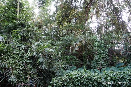 jayas-secret-garden-malaybalay-bukidnon.jpg