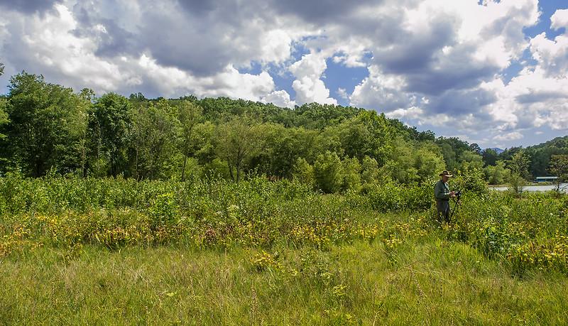 Green Pitcher Plant site in Georgia