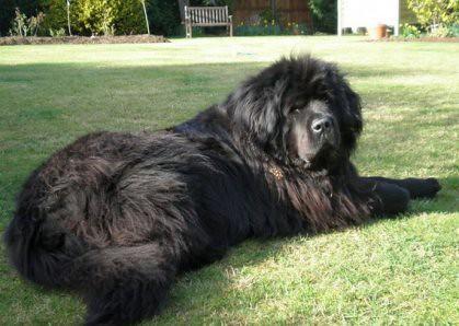 Big Hunting Dog Breeds