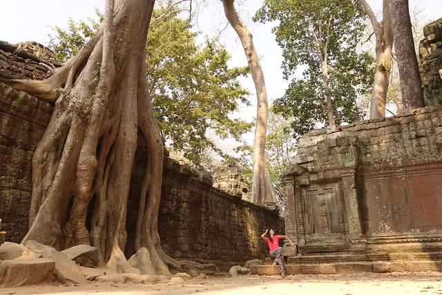 Ta Prohm / Temples d'Angkor