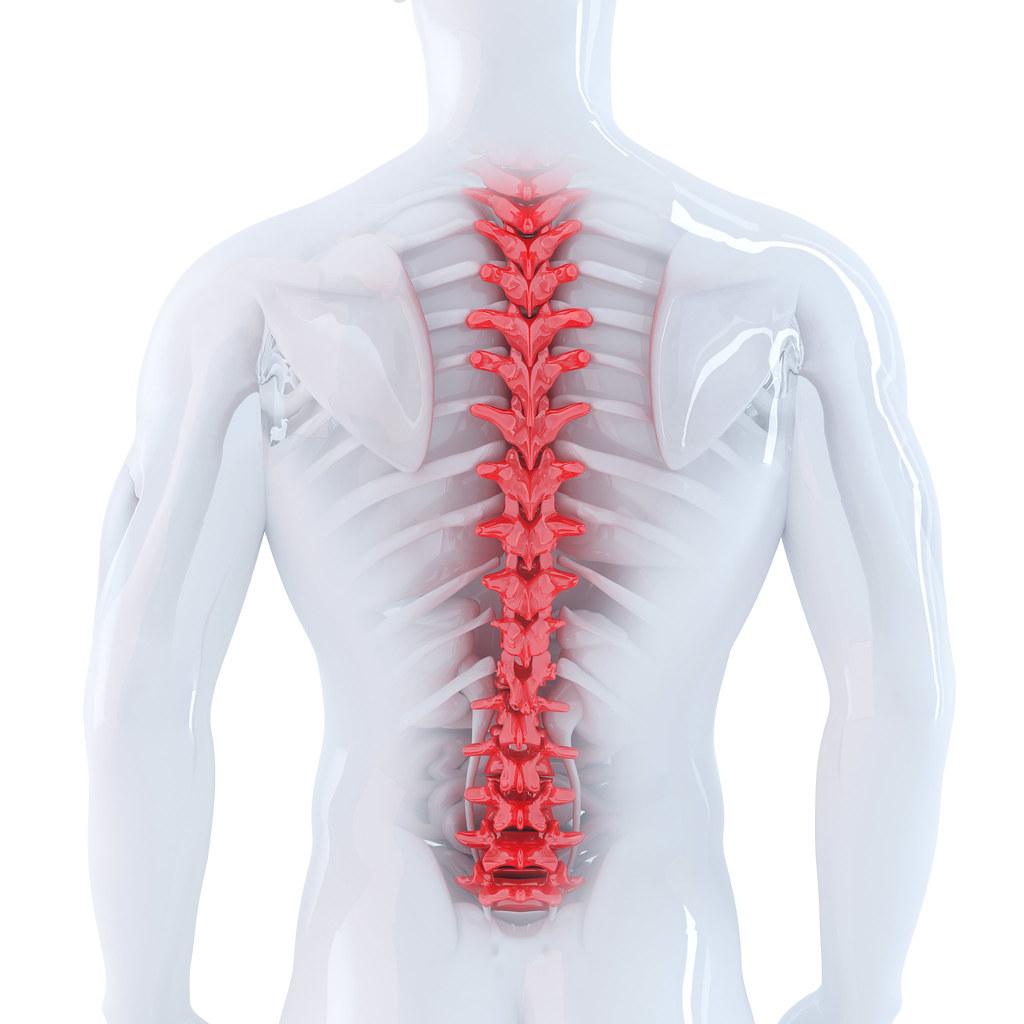 3d ilustración de la columna vertebral humana. Aislado. Co… | Flickr