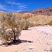 Smoke Trees @ Wind Caves, Anza-Borrego Desert State Park
