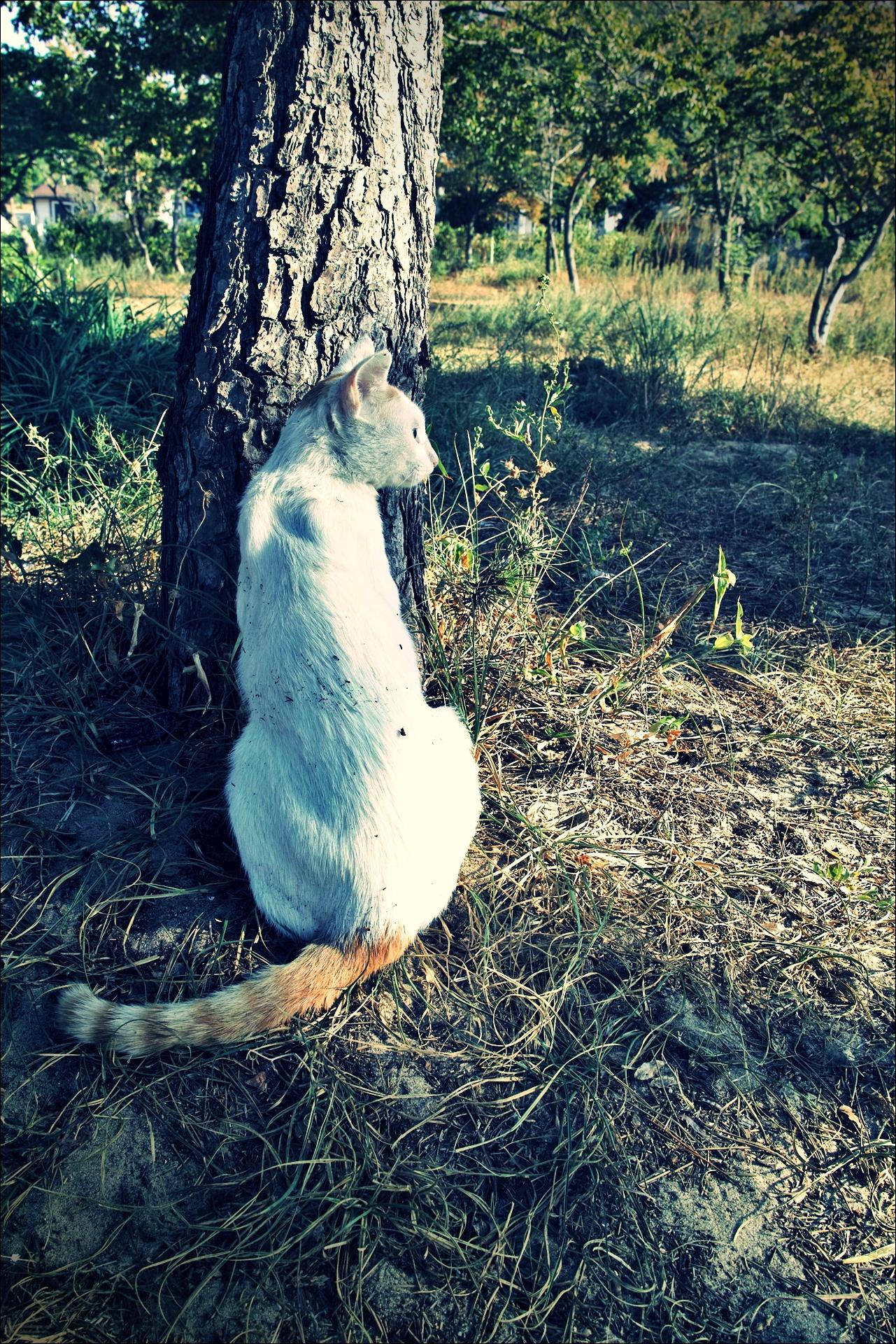 고양이-'자월도로 떠난 백패킹.'