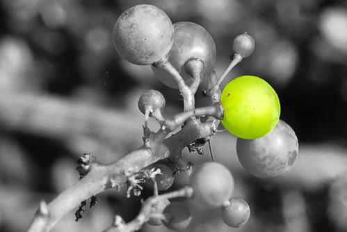 Digitales Fotolabor Herbstzeit Traubenzeit Fotos: Brigitte Stolle