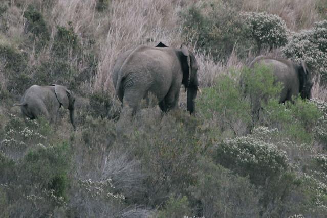 Gondwana Game Reserve