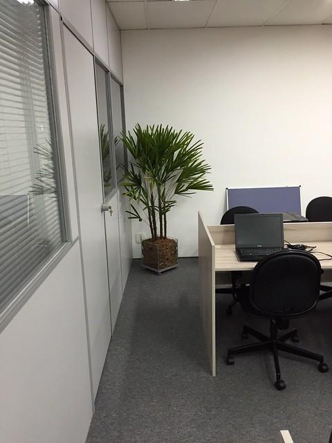 escritório com plantas