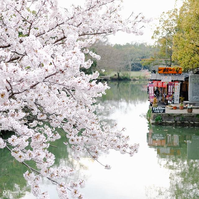 北九州之春 | 12