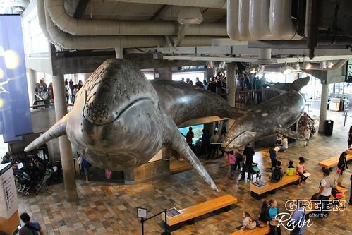 160703f Monterey Bay Aquarium _032