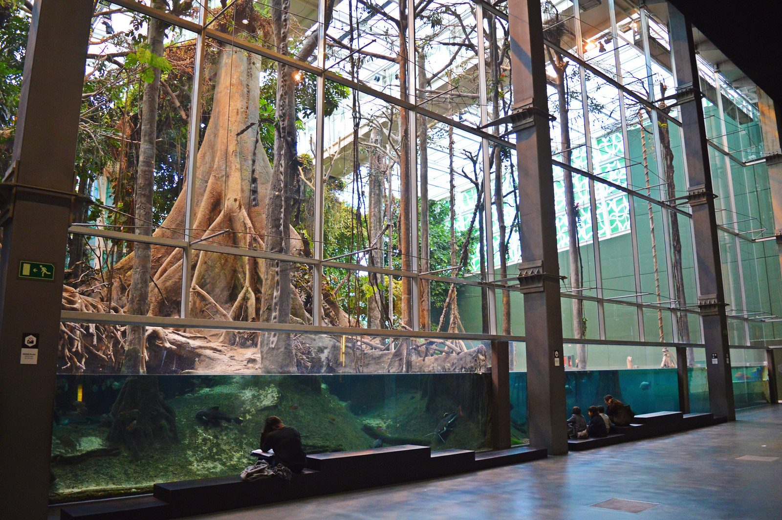 CosmoCaixa: A Little Piece of Rainforest in Barcelona ...